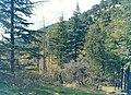 Trees army.jpg
