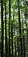 Trees of Pisgah National Forest (4976716747).jpg