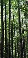 Trees of Pisgah National Forest (4976716747).jpg