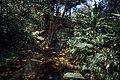 Trilha da figueira na Reserva Particular do Patrimônio Natural Salto Morato.jpg