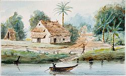 Tropenmuseum Royal Tropical Institute Objectnumber 1138-17f Aquarel voorstellende een Bosnegerkam.jpg