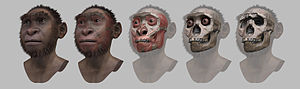 Richard Leakey - Turkana boy – steps of forensic facial reconstruction/approximation