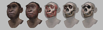 Turkana Boy - Steps of facial reconstruction