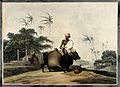 Two domesticated Asian water-buffalo being loaded up to carr Wellcome V0020207.jpg
