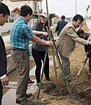 USAID supports tree planting in Nam Dinh Province (33189956471).jpg
