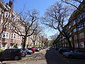 Ulmus glabra Cornuta (amsterdam milletstraat) 160505a.jpg