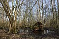 Umgefallener Baum im Everstenmoor 01.jpg