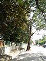 Umingan,Pangasinanjf4885 19.JPG