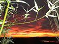 Un soir à Bouin, coucher de soleil sur les marais.JPG