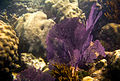 Under the sea at Dry Tortugas National Park (6021846465).jpg