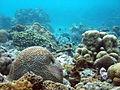 Underwater Moalboal 4.jpg