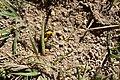 Včely samotářky (04).jpg