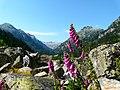 Vallée du Marcadau 100.JPG