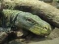 Varanus salvadorii.003 - Zoo Aquarium de Madrid.JPG
