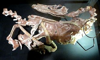 Velociraptor - Specimen IGM 100/982
