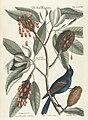 Verzameling van uitlandsche en zeldzaame vogelen (Tab. LXXVIII) (7894237146).jpg