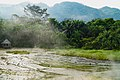 View of Rwenzori Mountains and Ituri Forest from Semuliki National Park - 1 Feb 2020.jpg