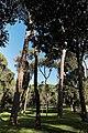 Villa Borghese 87.jpg