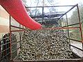Villa Montereggi-cart full of leaves 2.jpg