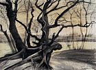 A drawing of gnarled black tree roots