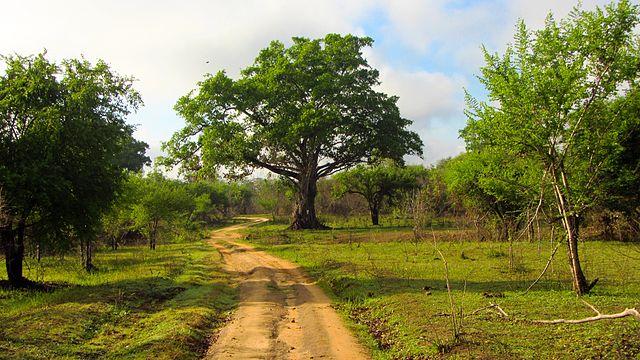 Parco nazionale di Wasgamuwa