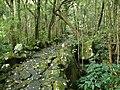 Waterfall Path. - panoramio.jpg