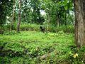 Wayanad Wildlife Sanctuary, Tholpetty Range - panoramio (6).jpg