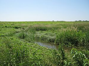 White Stone Creek (Vermillion River tributary) - White Stone Creek
