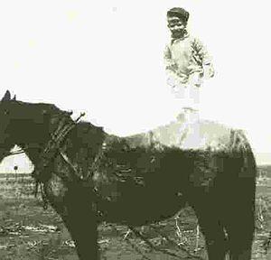 William John Cox - On Work Horse (1944)