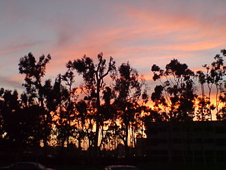 Torrance, California - Wilson Park, in Torrance at sunset.