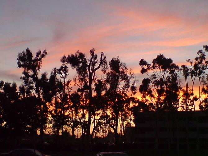 Wilson Park, in Torrance at sunset.