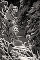 Winter- Snow draped spruce (6756820099).jpg