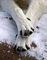 Wolf Paws (6798208076).jpg