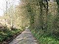 Wooded lane - geograph.org.uk - 386932.jpg