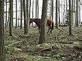 Woodened horse - geograph.org.uk - 454726.jpg