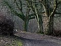 Woodland path at the Weald and Downland Museum - geograph.org.uk - 1158023.jpg