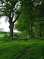 Woodland track near Chesterton, Shropshire - geograph.org.uk - 1303574.jpg