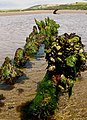 Wreck of the Aramenta - geograph.org.uk - 461755.jpg