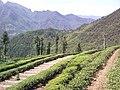 Wufeng, Yichang, Hubei, China - panoramio (11).jpg