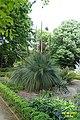 Xanthorrhoea quadrangulata (34418931621).jpg