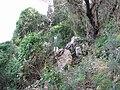 Yagur – Nesher, the Green Path – Mount Carmel 087.JPG