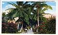 """A Mid-Winter Scene in Florida"" (10836937774).jpg"