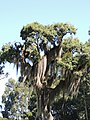 Árvore 1.jpg