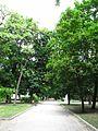 Алея Ковалівського парку.jpg