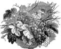 Виноград 1 (БЭАН).png