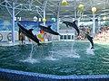 В Євпаторійському дельфінарії.JPG