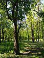 Голосіївський парк 1.jpg