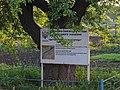 Дерево культурної груші, Катеринівка 02.jpg