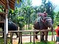 Заповедник слонов (Исм.Альберт) - panoramio.jpg