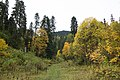 Карачаево-Черкесия, Западный Кавказ, Софийская долина, хвойный лес, Karachay-Cherkessia.jpg